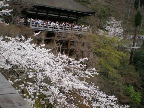 cherry blossom Kiyomizu